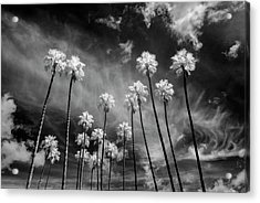 Palms Acrylic Print by Sean Foster