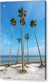 Palms Up Acrylic Print by Marvin Spates