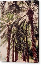 Palmtree Acrylic Print by Jeanette Korab