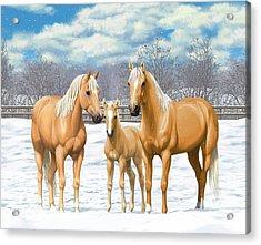 Palomino Horses In Winter Pasture Acrylic Print