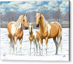 Palomino Paint Horses In Winter Pasture Acrylic Print