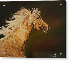Palomino Running Wild                     85 Acrylic Print