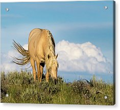 Acrylic Print featuring the photograph Palomino Wild Stallion In The Evening Light by Nadja Rider