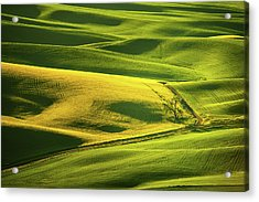 Acrylic Print featuring the photograph Palouse Shades Of Green by Dan Mihai