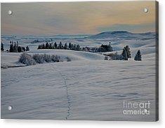 Palouse Tracks Acrylic Print by Idaho Scenic Images Linda Lantzy