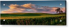 Acrylic Print featuring the photograph Palouse Tree Of Life by Dan Mihai