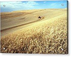 Palouse Wheat Acrylic Print by USDA and Photo Researchers