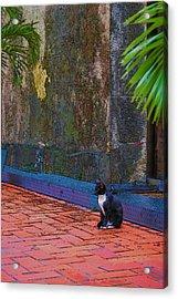 Panama Cat Acrylic Print by Robert Boyette