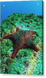 Panamic Cushion Star Acrylic Print by Sami Sarkis