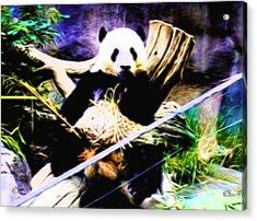 Panda Bear 1 Acrylic Print