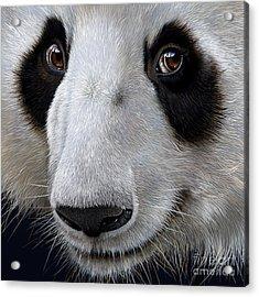 Panda Bear Acrylic Print by Jurek Zamoyski