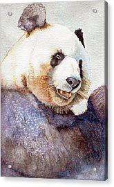 Panda Eating Acrylic Print