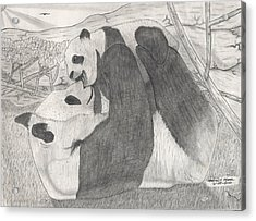 Panda Family Acrylic Print by Matthew Moore