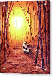 Panda In Golden Glow Acrylic Print by Laura Iverson