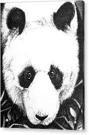 Panda Portrait Acrylic Print