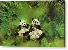 Pandas  Acrylic Print by Odile Kidd