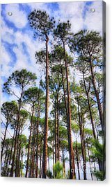Acrylic Print featuring the photograph Panhandle Pines by Mel Steinhauer