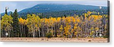 Panorama Of Changing Aspens At Rocky Mountain National Park - Estes Park Colorado Acrylic Print