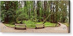 Panorama Of Muir Woods National Monument Boardwalk - Marin County California Acrylic Print by Silvio Ligutti