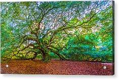 Panoramic Angel Oak Tree Charleston Sc Acrylic Print