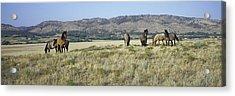 Panoramic Image Of Wild Horses Of Black Acrylic Print