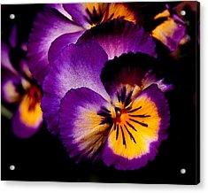 Pansies Acrylic Print by Rona Black