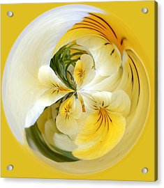Pansy Ball Acrylic Print by James Steele