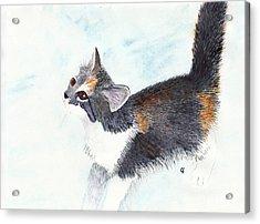 Calico Barn Cat Watercolor Acrylic Print