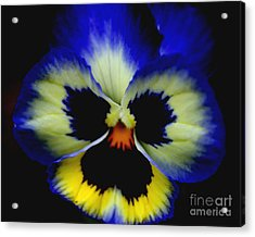 Pansy Face Acrylic Print by Smilin Eyes  Treasures