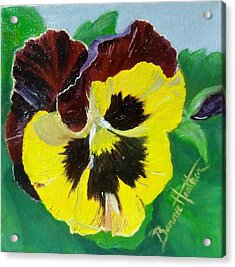 Pansy No. Ten Acrylic Print by Bonnie Heather