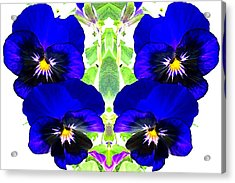 Acrylic Print featuring the photograph Pansy Pattern by Marianne Dow