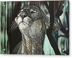 Panther, Cool Acrylic Print