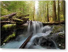 Panther Creek In Gifford Pinchot National Forest Acrylic Print by David Gn