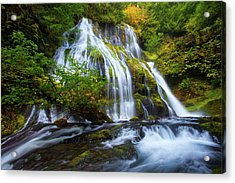 Panther Falls Acrylic Print by Darren White