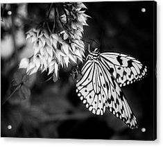 Paper Kite In Black And White Acrylic Print