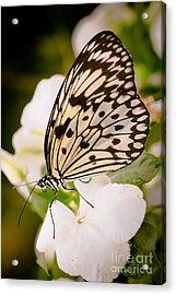 Paper Kite On White Acrylic Print