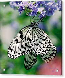 Acrylic Print featuring the photograph Paper Rice Butterfly by Donna Brown