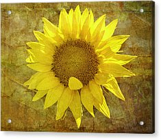 Acrylic Print featuring the photograph Paper Sunshine by Melinda Ledsome