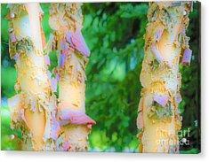 Paper Thin Bark Acrylic Print