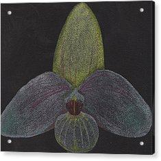 Paphiopedilum Mem. Orchid Acrylic Print