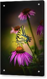 Papilio Acrylic Print