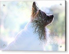 Papillon Pine Landscape Acrylic Print