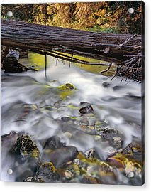 Papoose Creek Acrylic Print by Leland D Howard