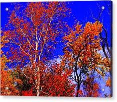 Paprika Acrylic Print by Ed Smith