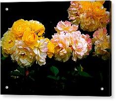 Parade Of Roses  Acrylic Print