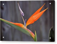 Acrylic Print featuring the photograph Paradise Found by John Knapko