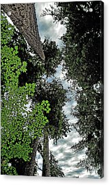 Paradise To Lovers Of Big Trees - Olympic National Park Wa Acrylic Print