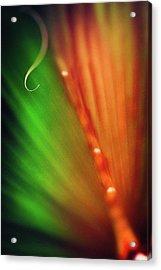 Parallel Botany #5199 Acrylic Print
