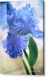 Parallel Botany #5254 Acrylic Print by Andrey Godyaykin