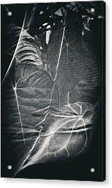 Parallel Botany #5266 Acrylic Print